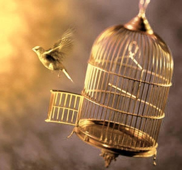 oiseau cage.jpg