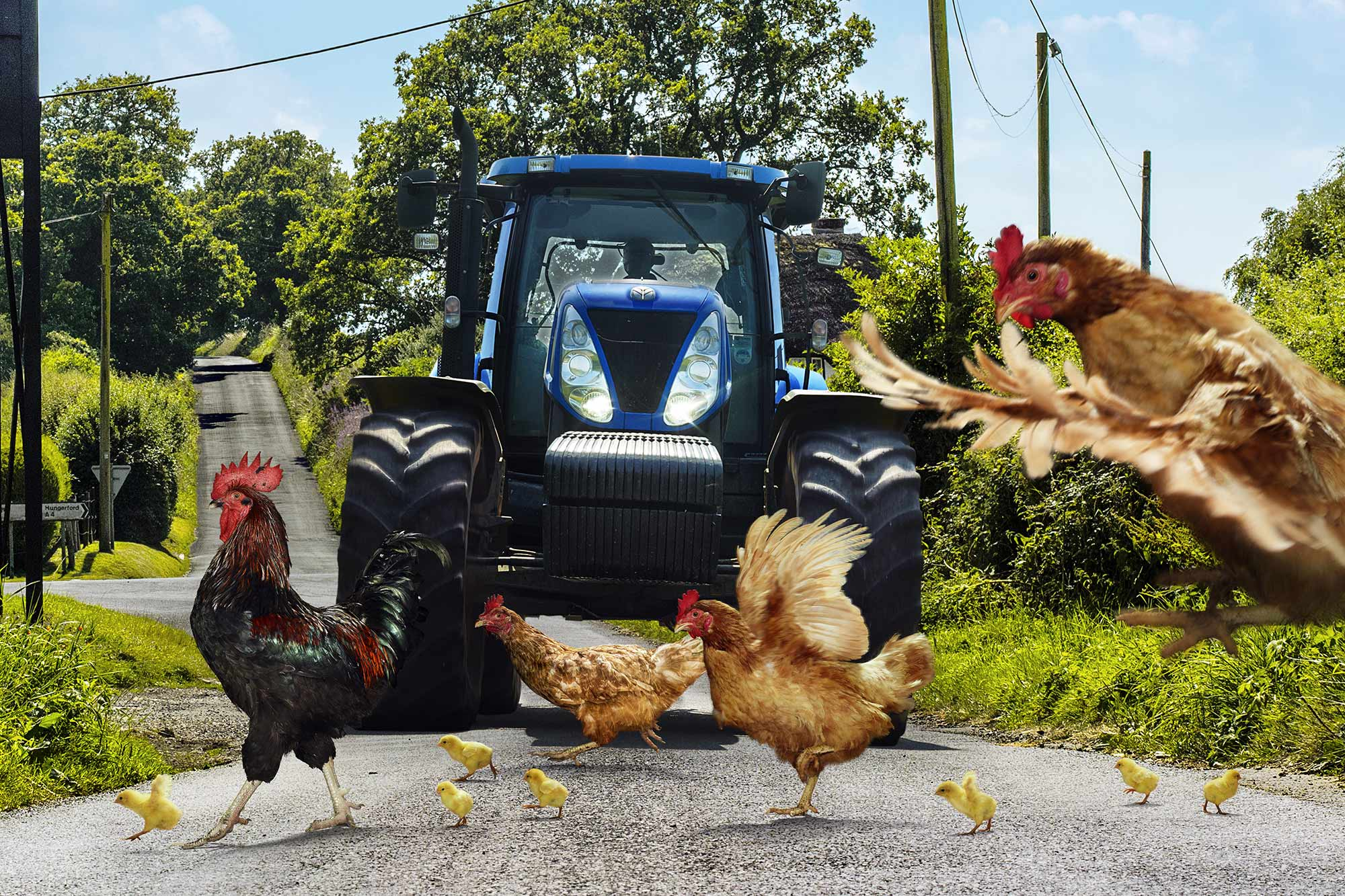 Animal Photo Chickens and Tractor