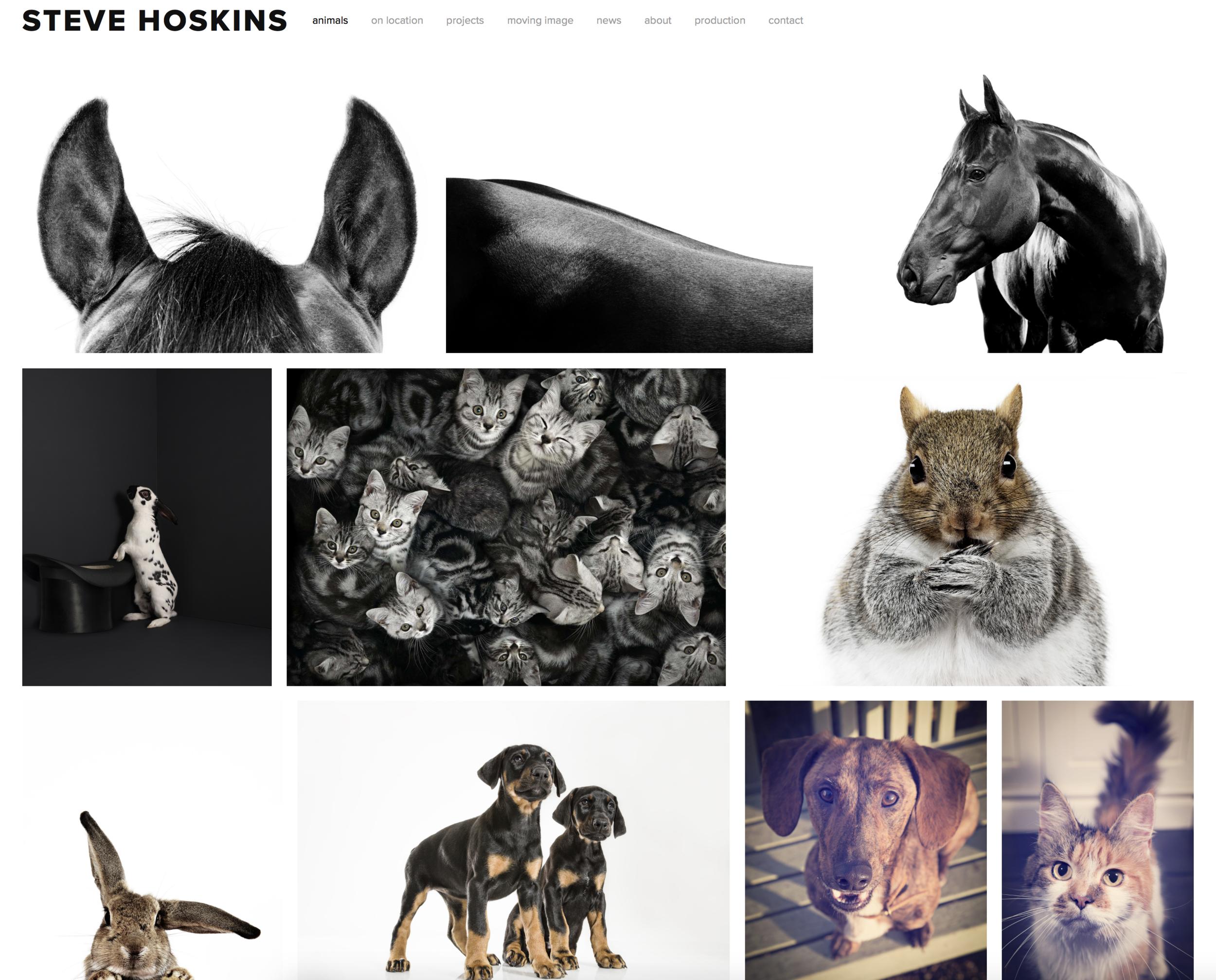 Steve Hoskins new website animal photography