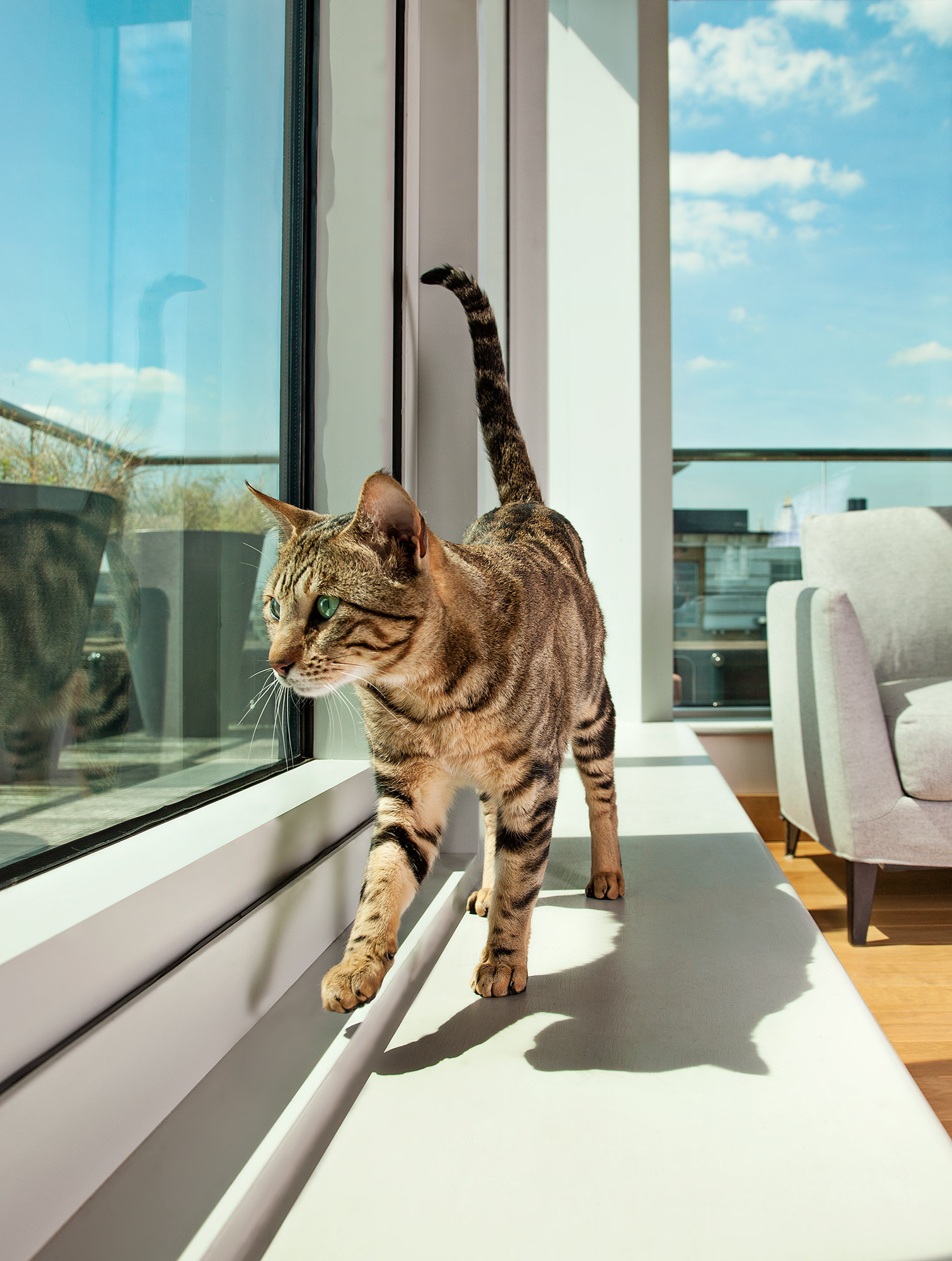 Cat in window animal photo