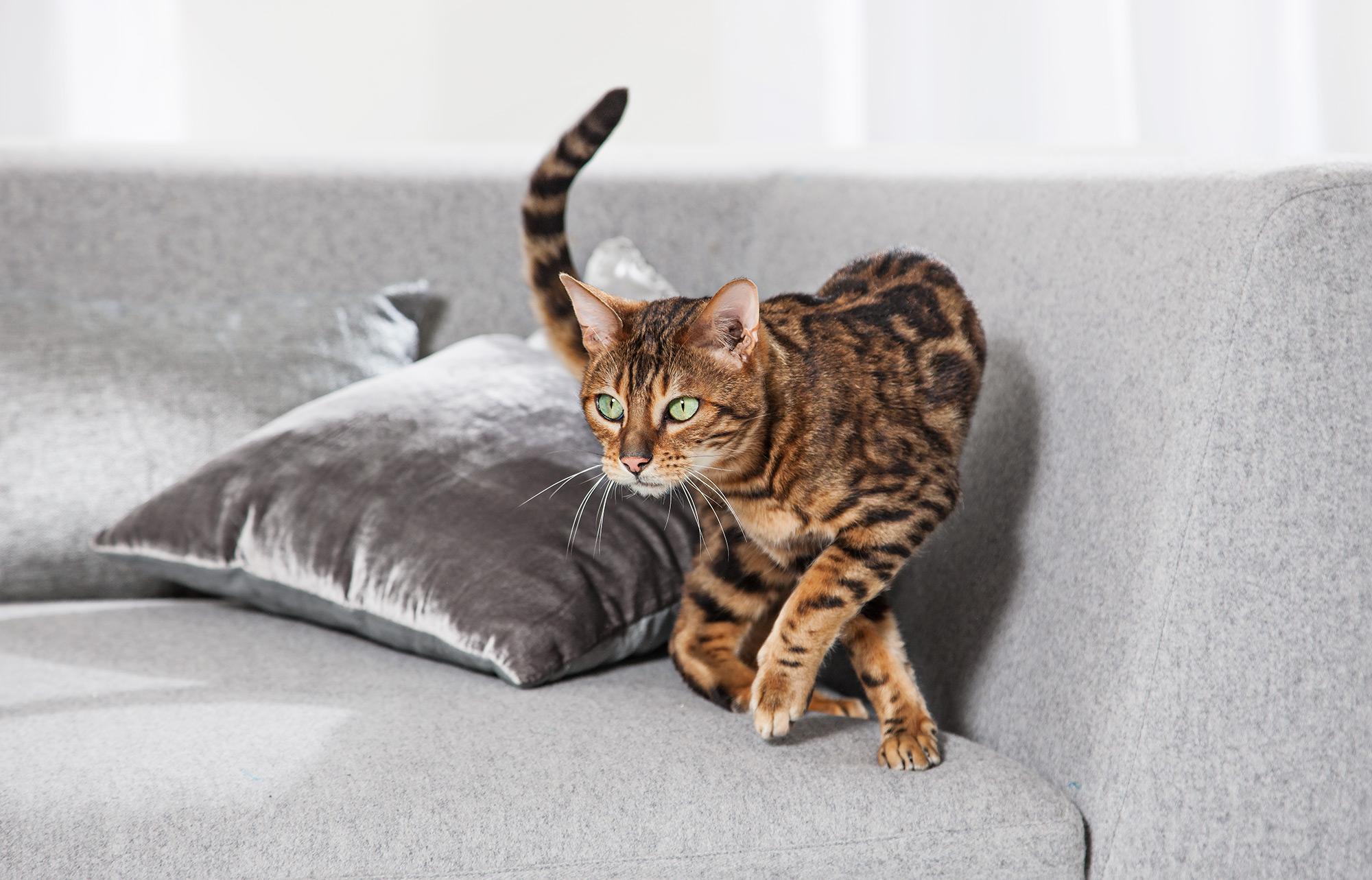 Cat on sofa animal photo