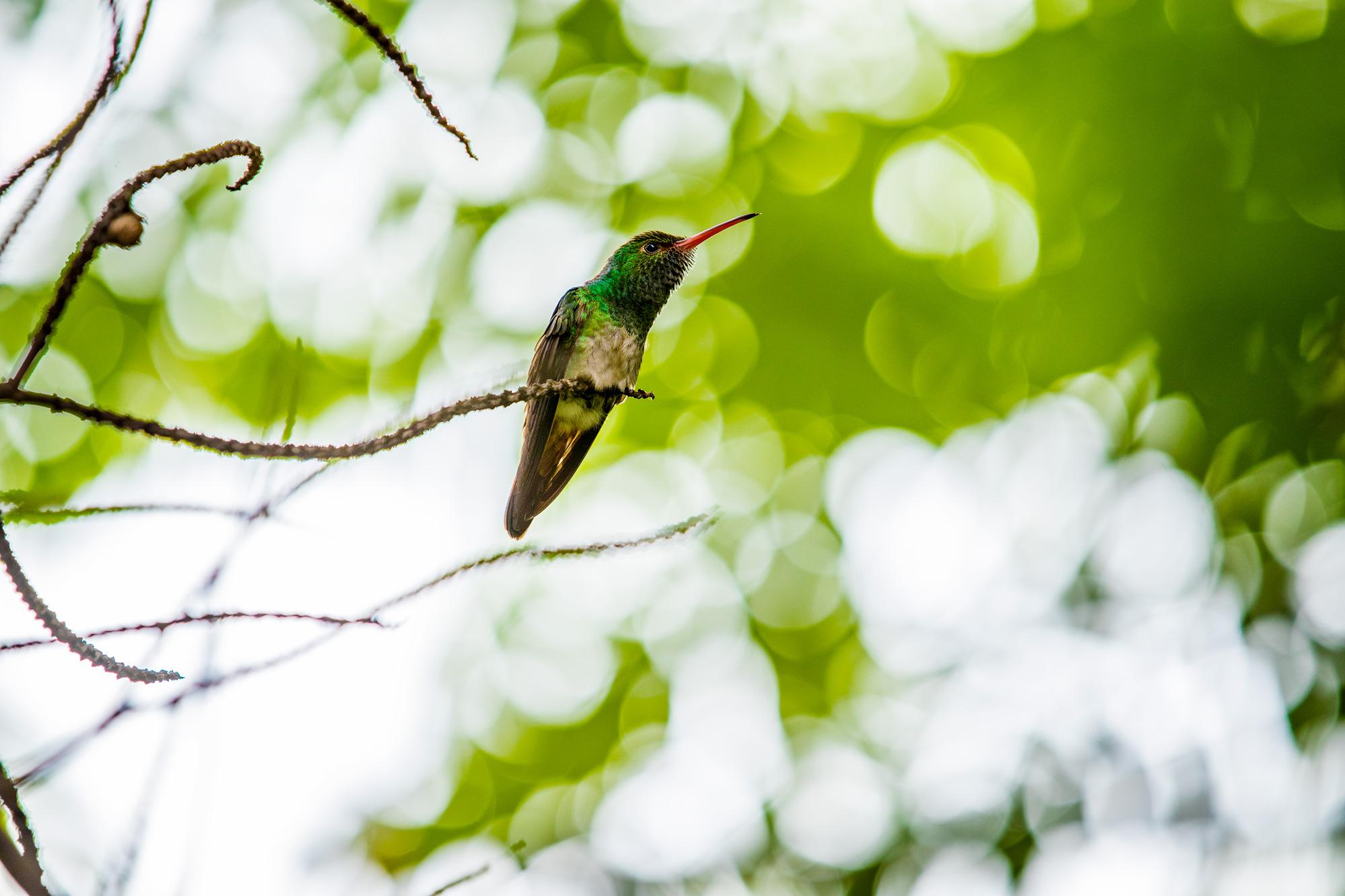 Costa_Rica_MISC_448.jpg