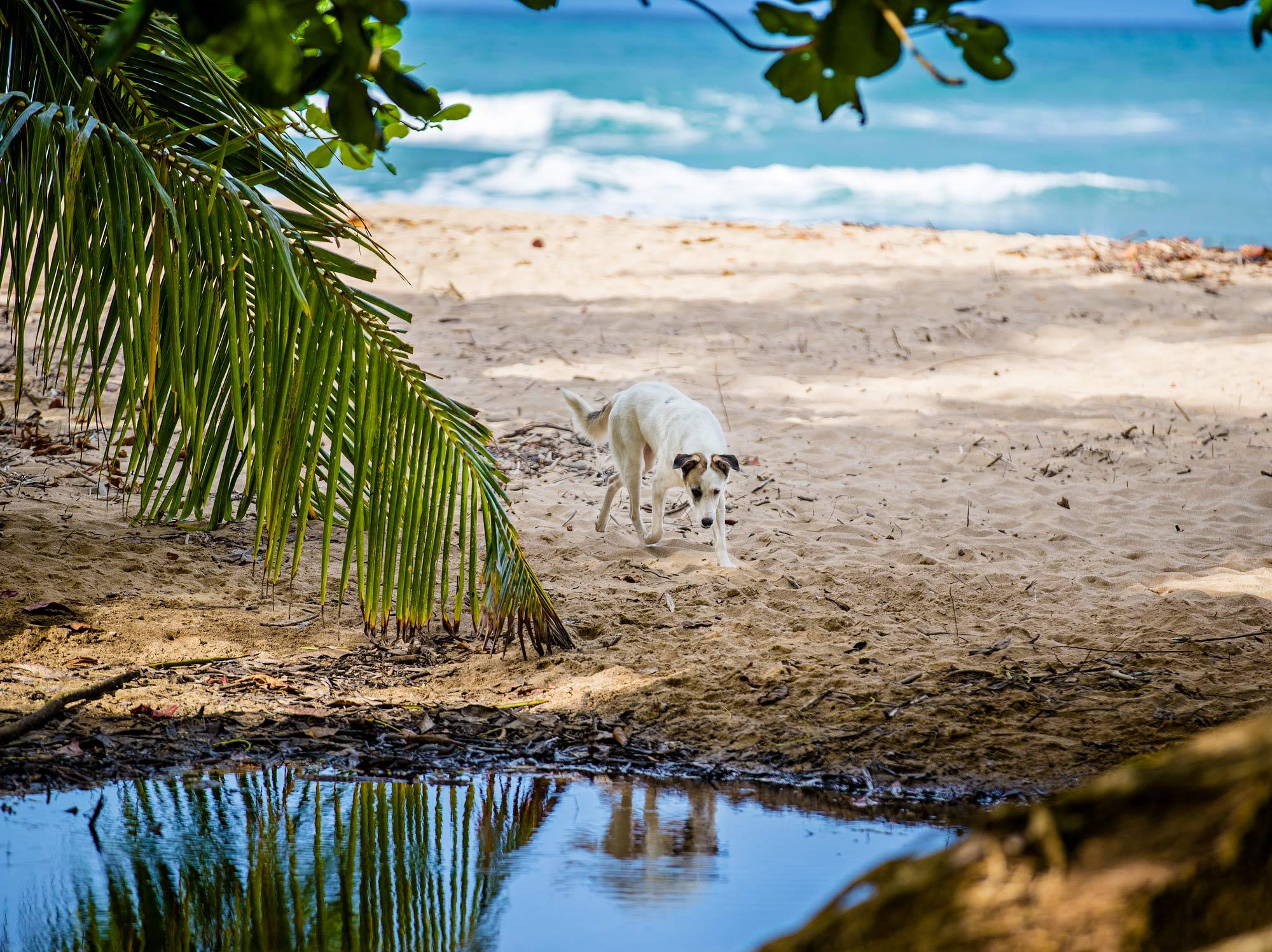 Costa_Rica_MISC_883.jpg