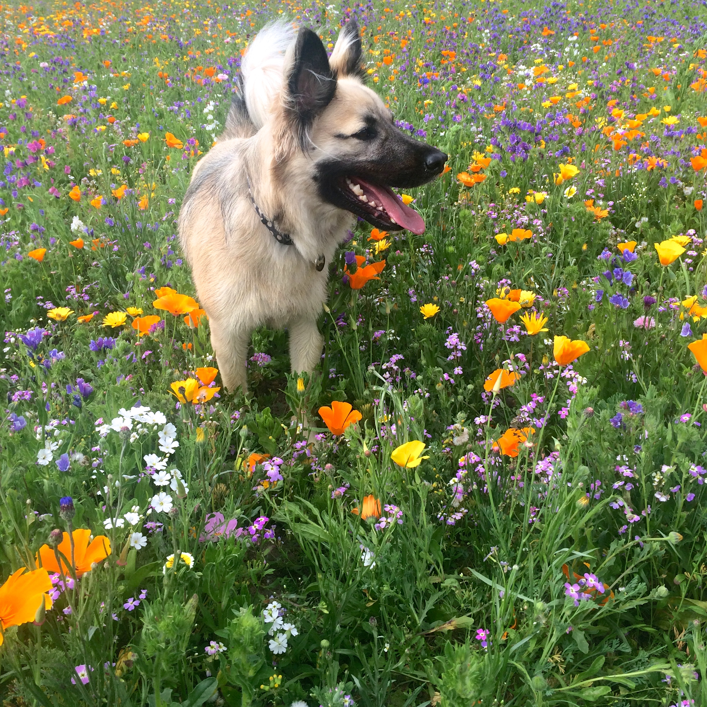 Frolicking in the Wild Flowers, Brighton