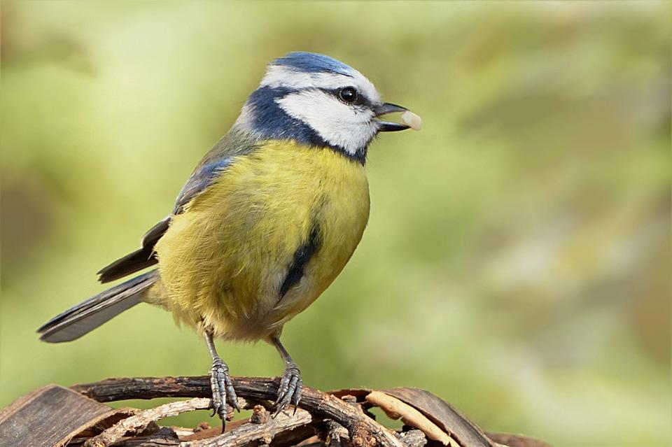 bird-784017_960_720.jpg