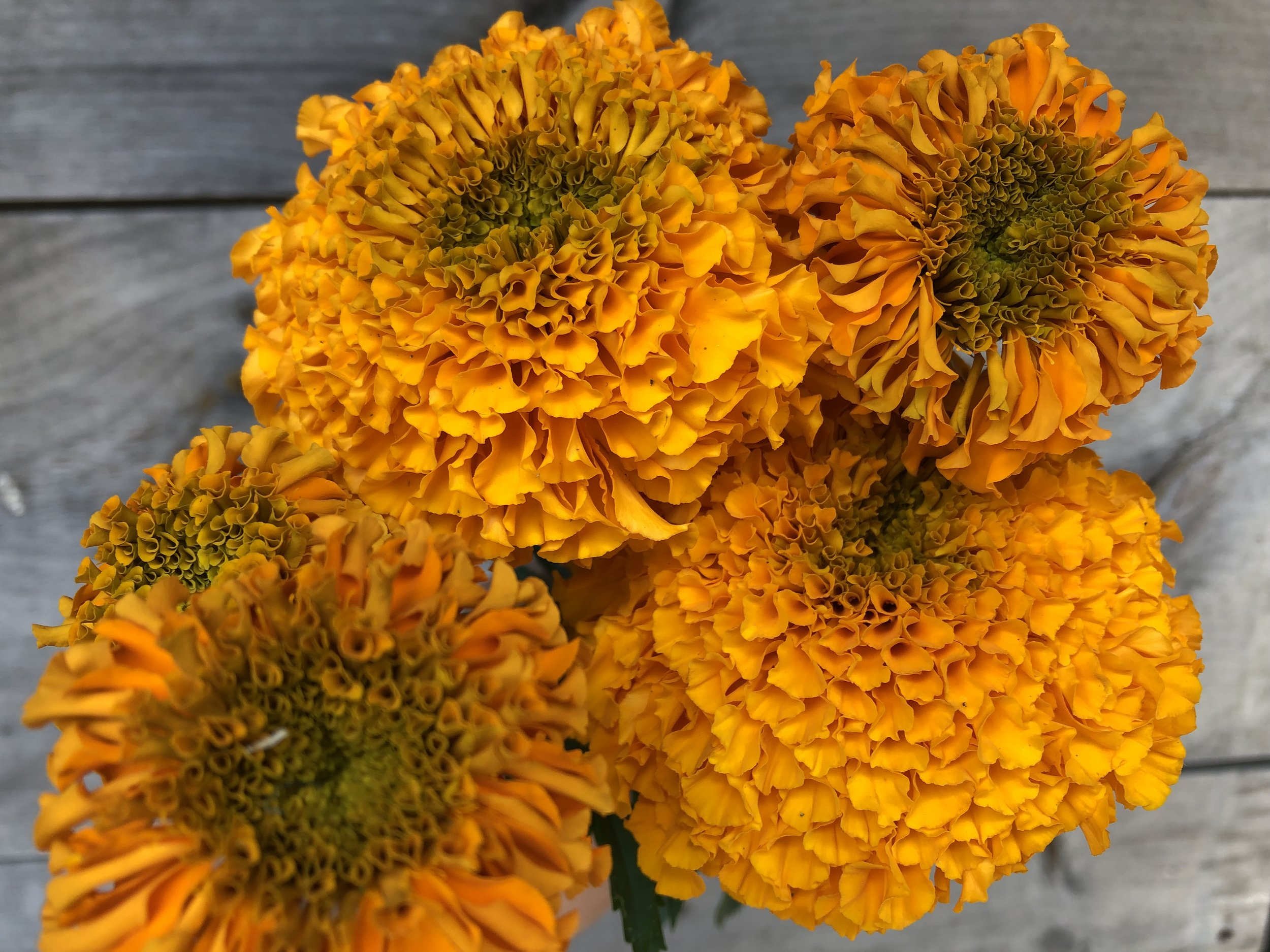 Marigold, Narai Orange