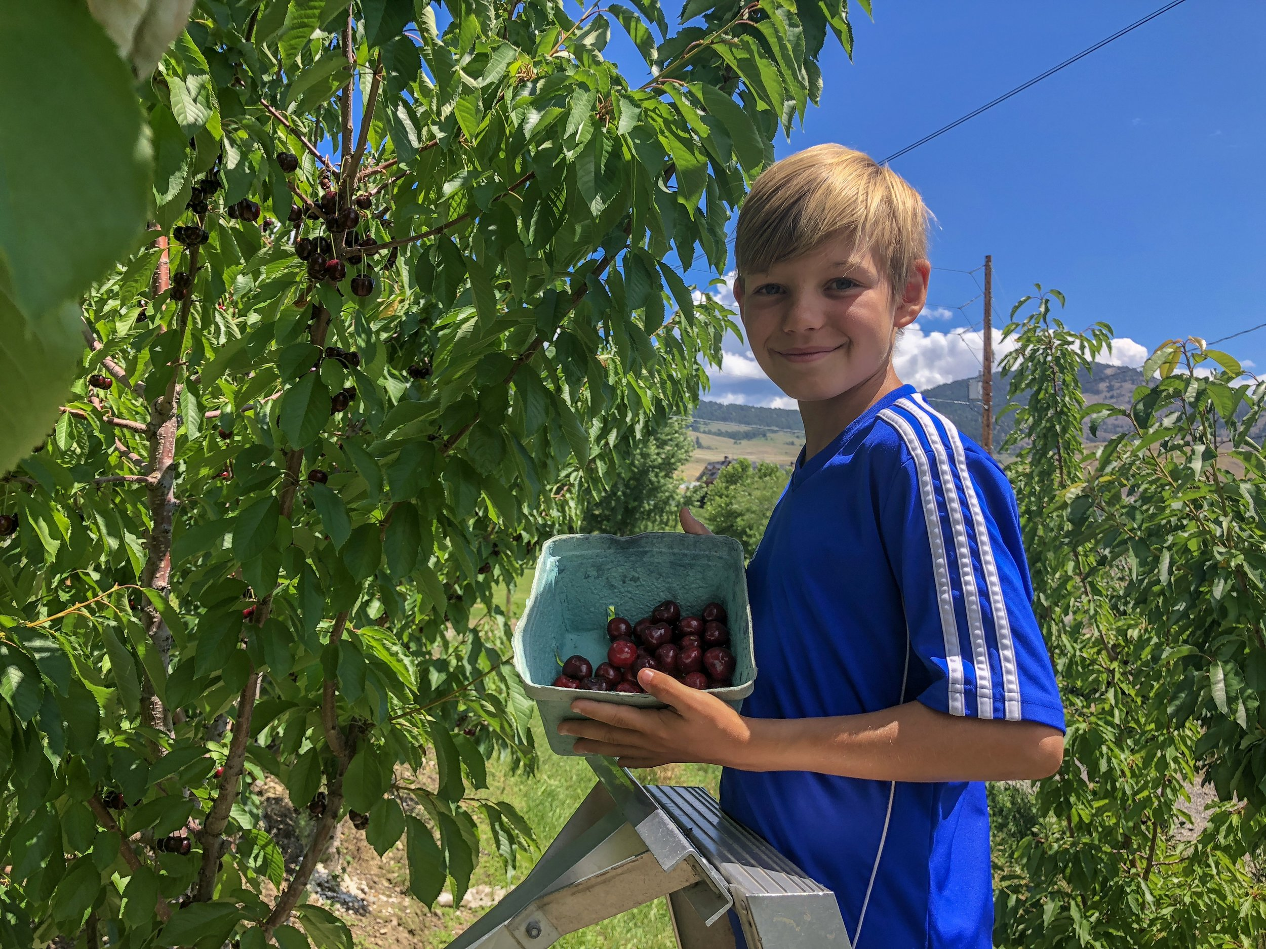Layton showing off his container that's starting to fill up with tasty Okanagan cherries.