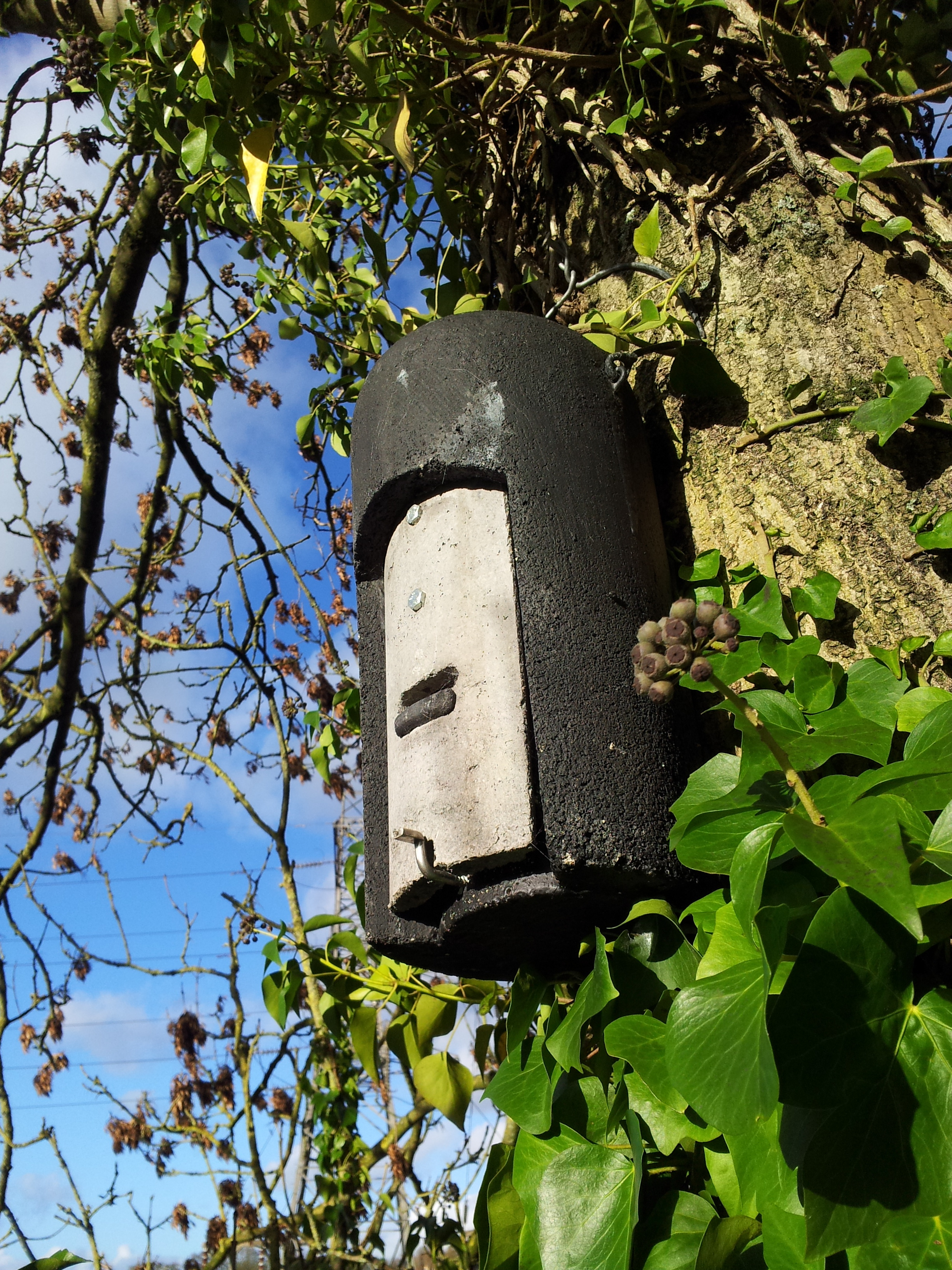 EcoCon supply and erect several types of bat box depending on your organisations requirements.