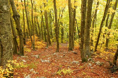 Arboricultural Services