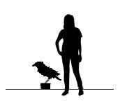 Gloag_Dusk_Raven_Size.jpg