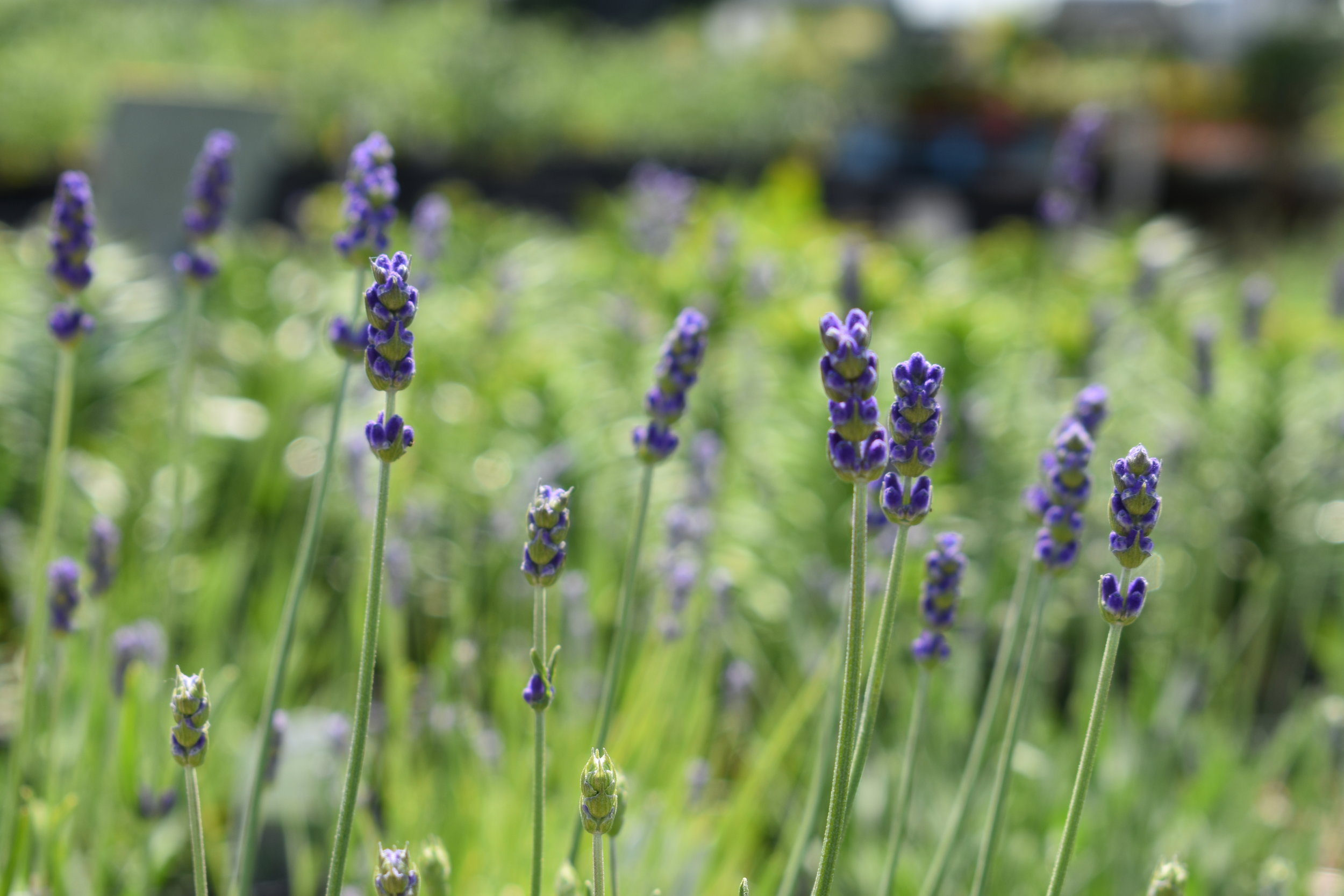 Perennials - Perennial flowers bloom part time of the spring and summer, but they are winter hardy. Meaning they will come back year after year unlike annuals.