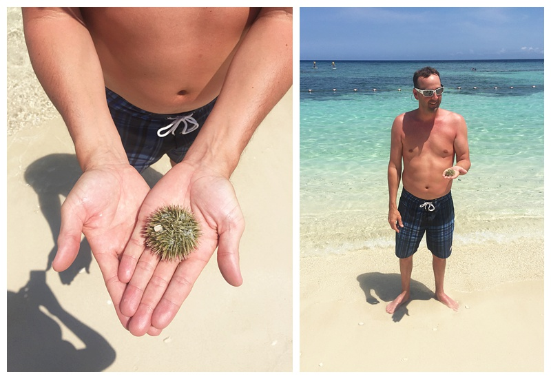 and a sea urchin!