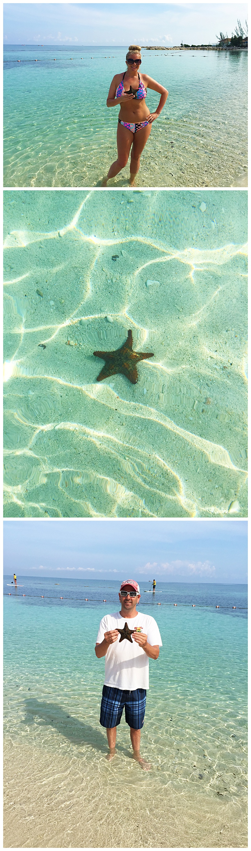 More starfish!