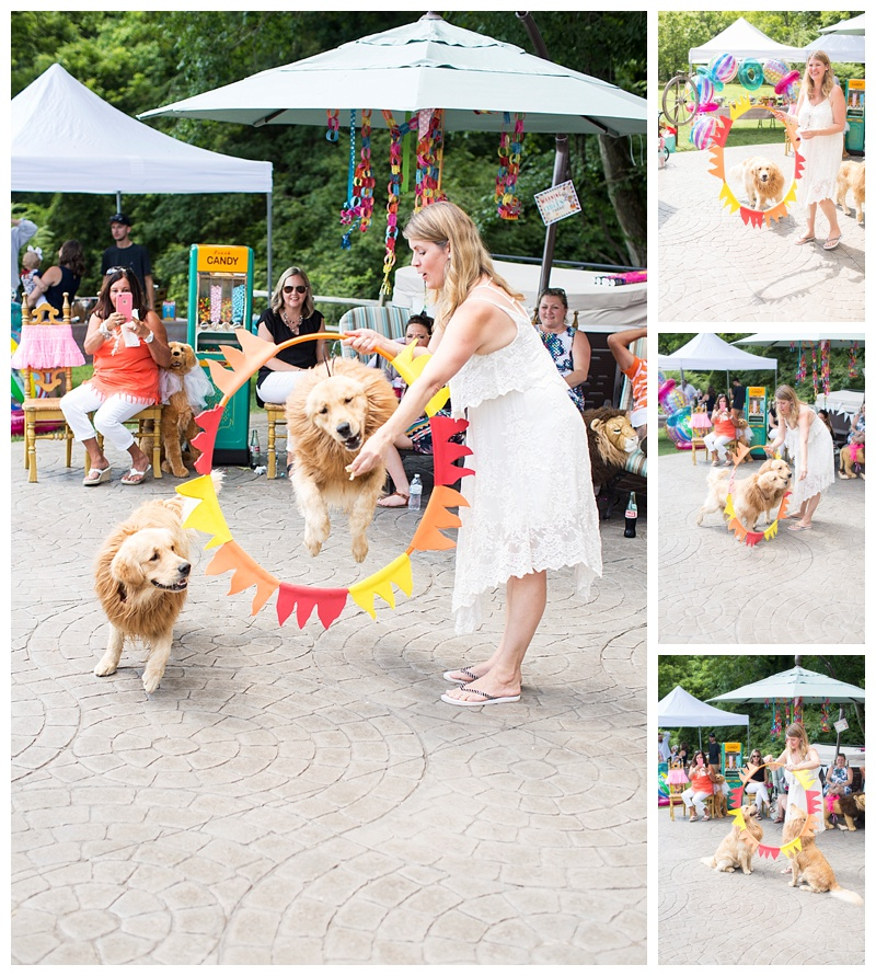 Karen our Lion tamer with Lion (bentley) and Lion (Romeo)