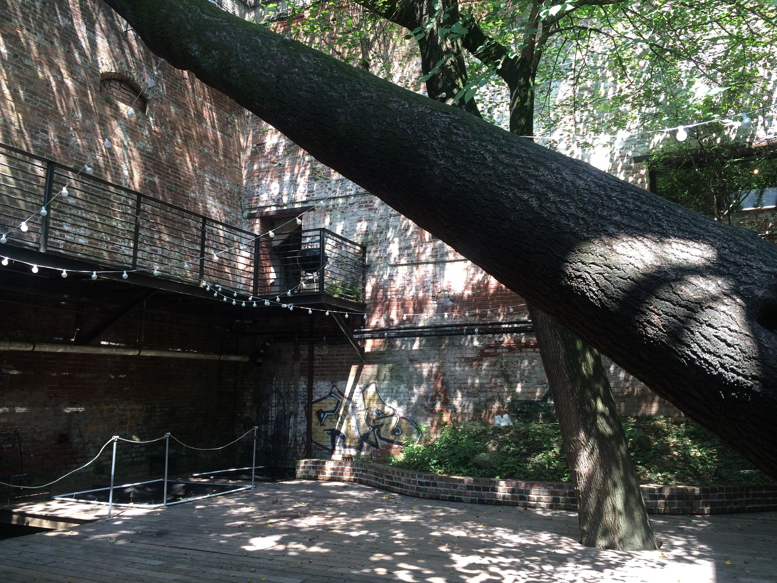 0 Tree Room.JPG