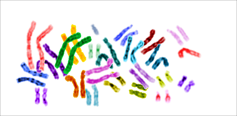karyotype.png