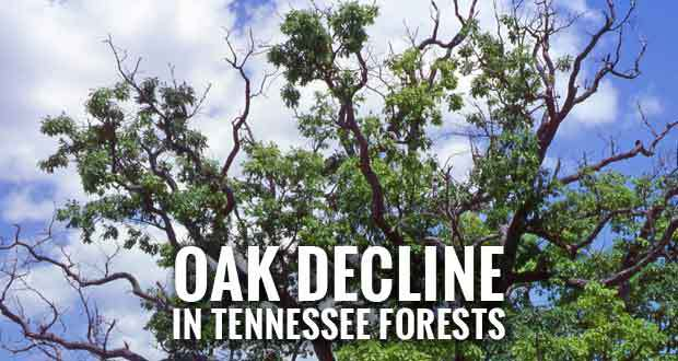 Last Year's Drought May Spur Oak Decline in Tennessee.jpg