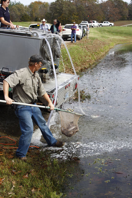 ark trout stocking.jpg