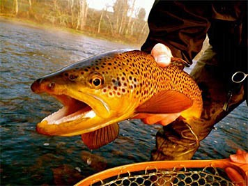 troutunlimited.jpg
