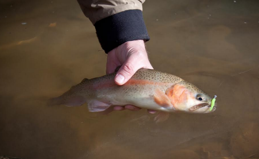 Kentucky Catch-and-Release Underway.png
