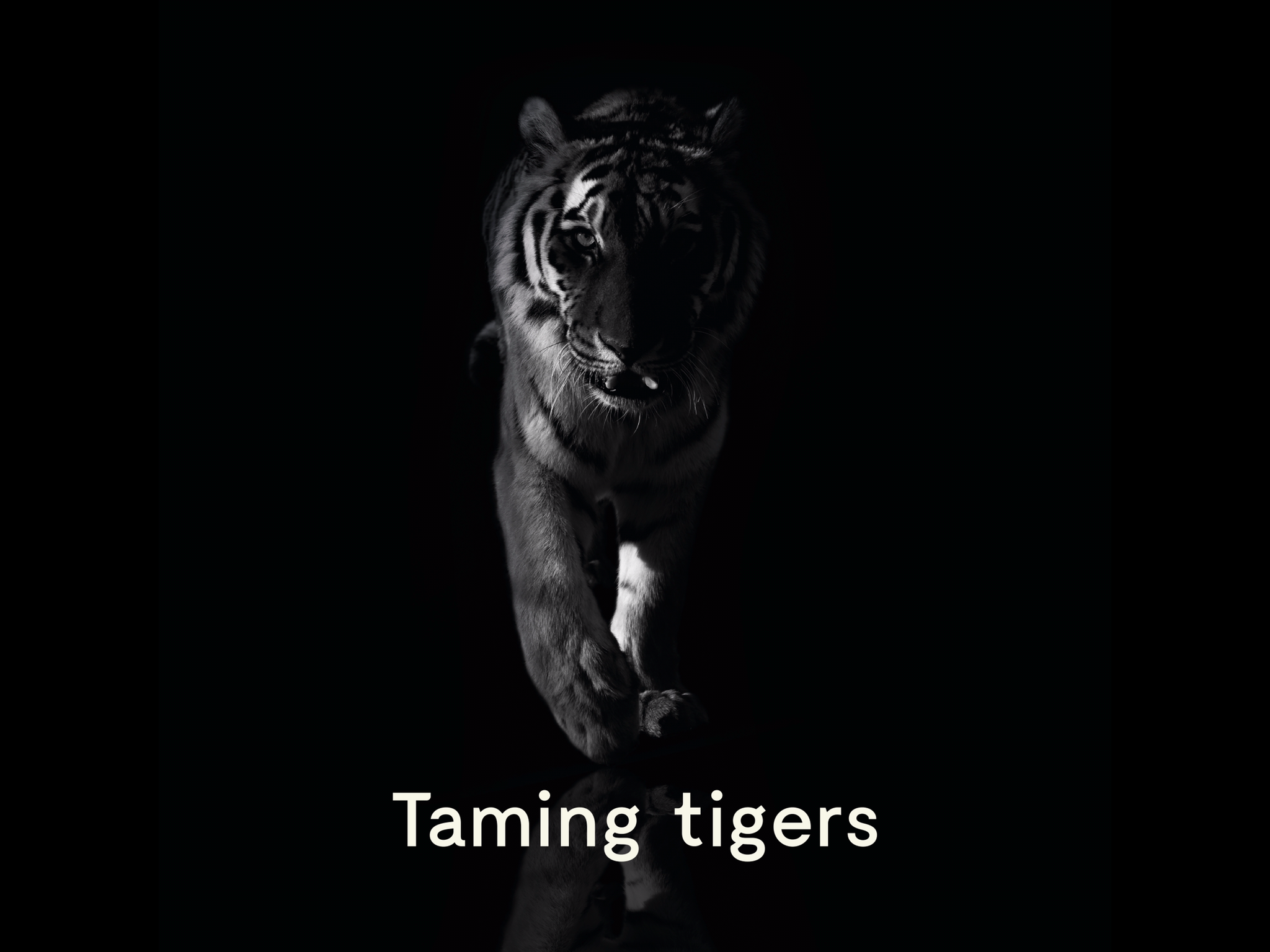 Taming Tigers  Podcast