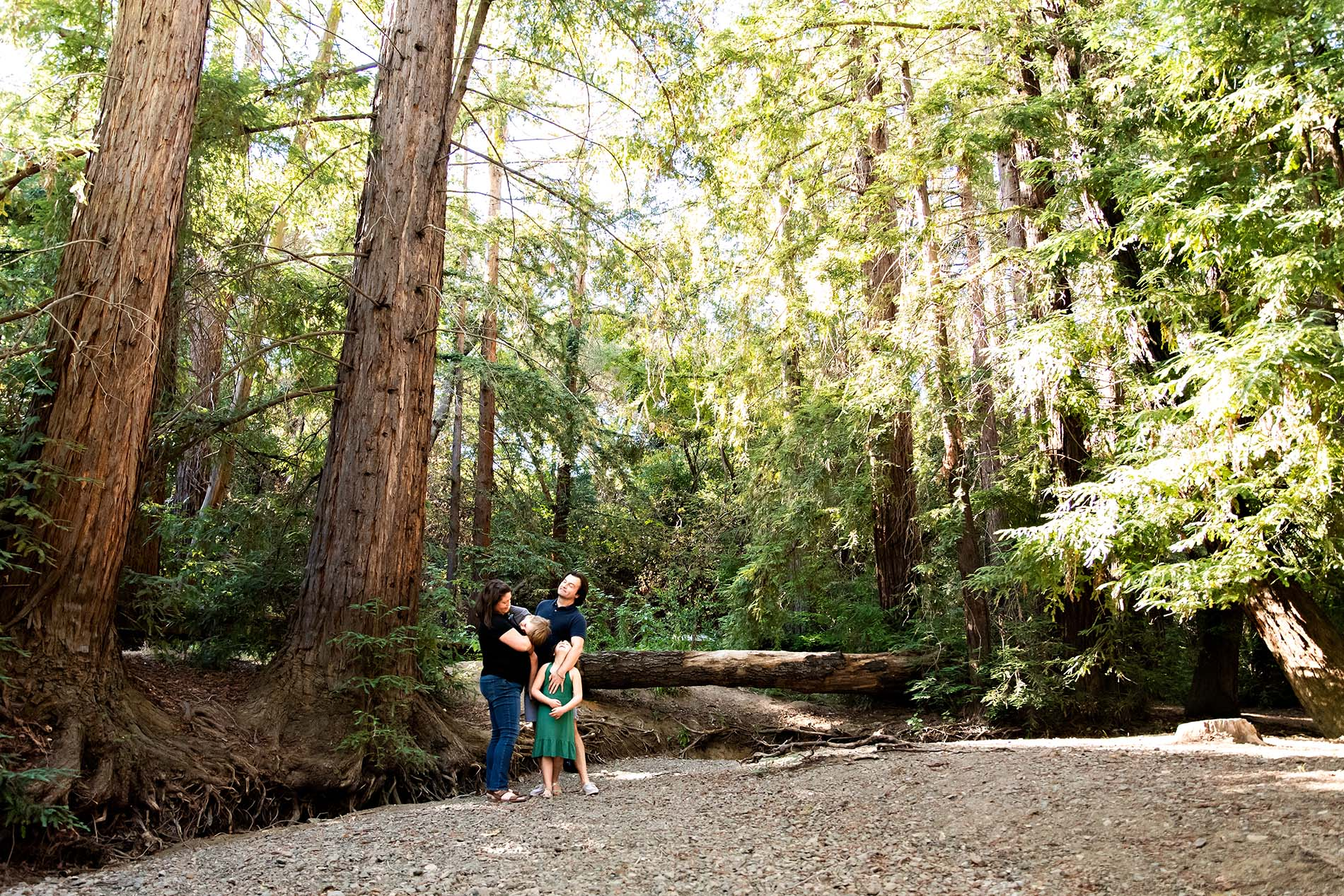 sharon kenney family photography redwood grove