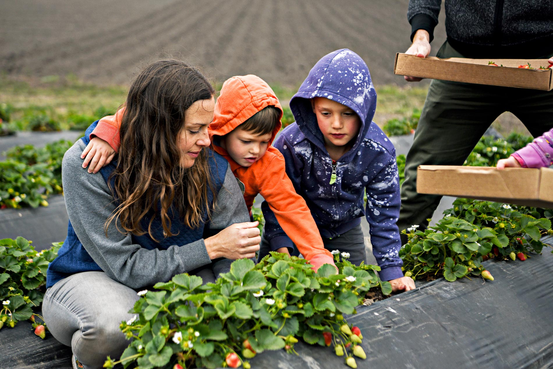 family story berry picking