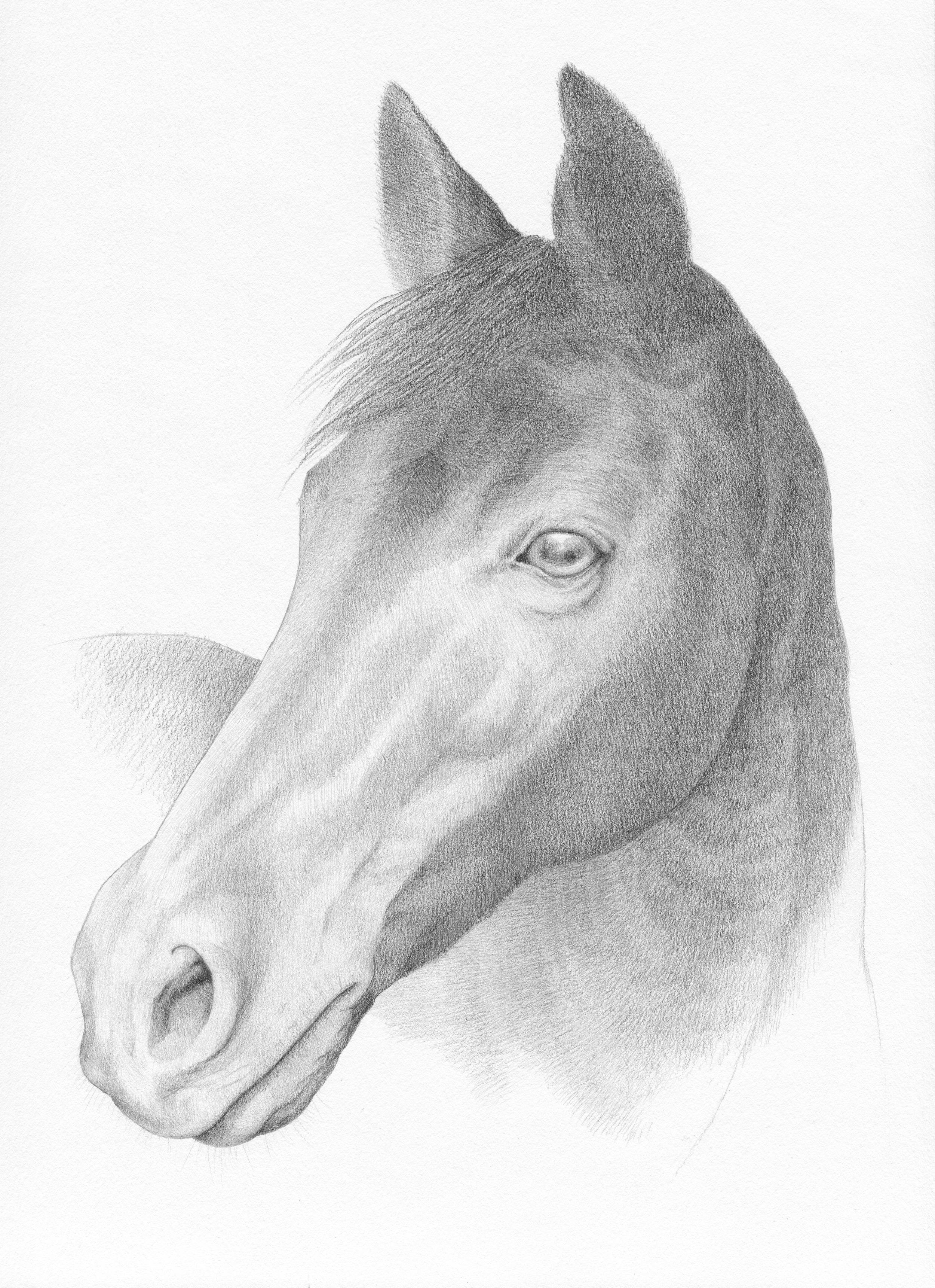 horse portrait, copyright katie koch 4.jpg
