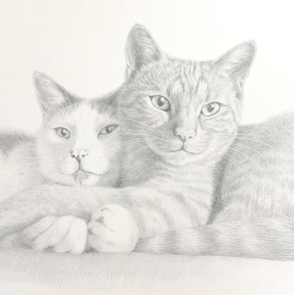 1-cat portrait by Katie Koch-001.JPG