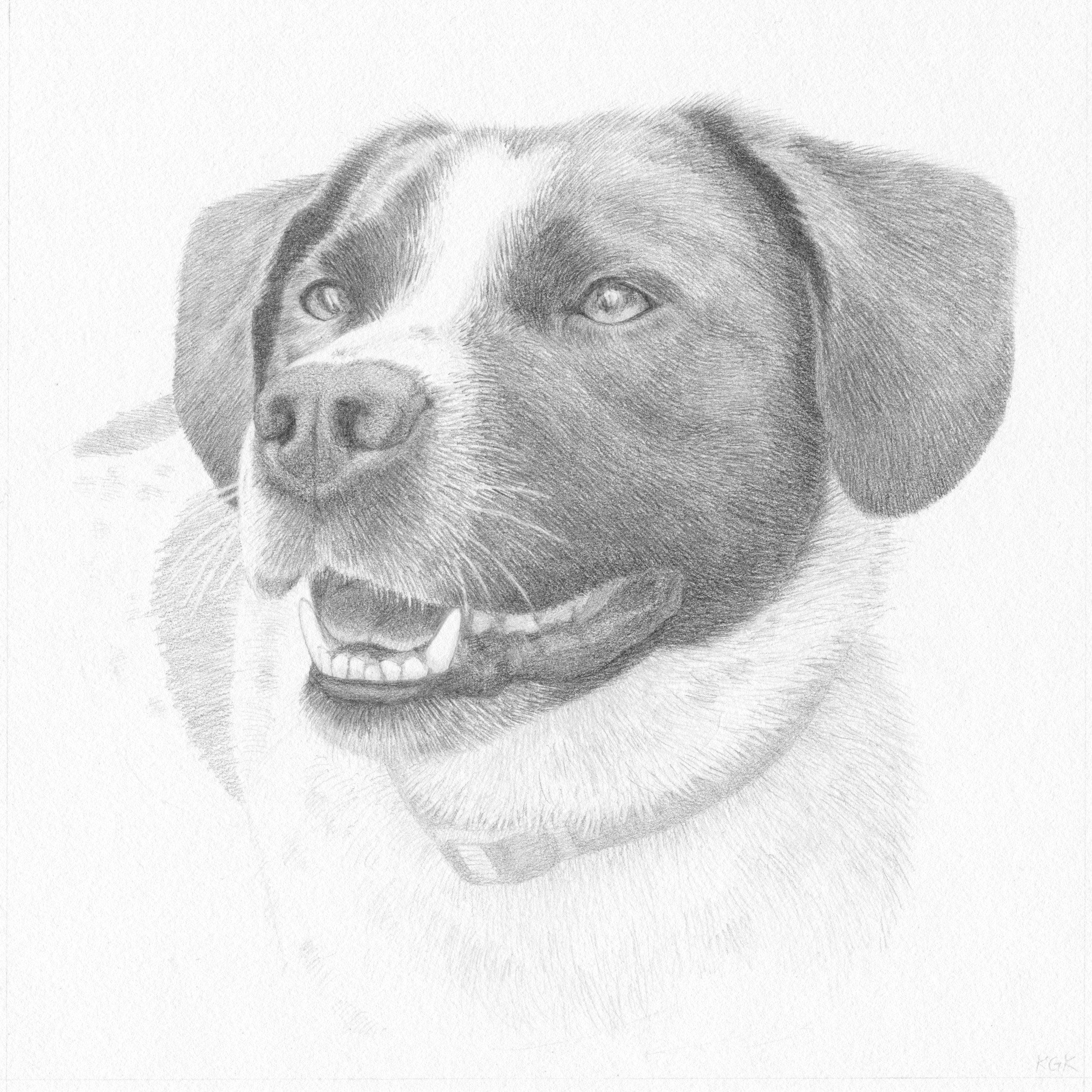 speckles portrait, copyright katie koch.jpg