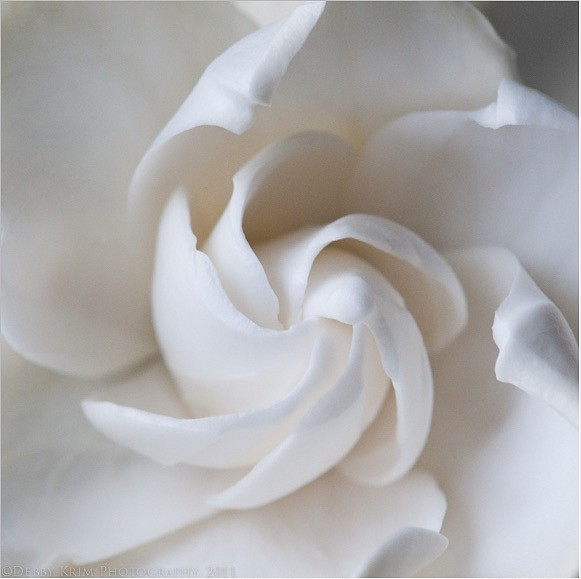 Debby Krim - The Colors of White Photography 1.jpg