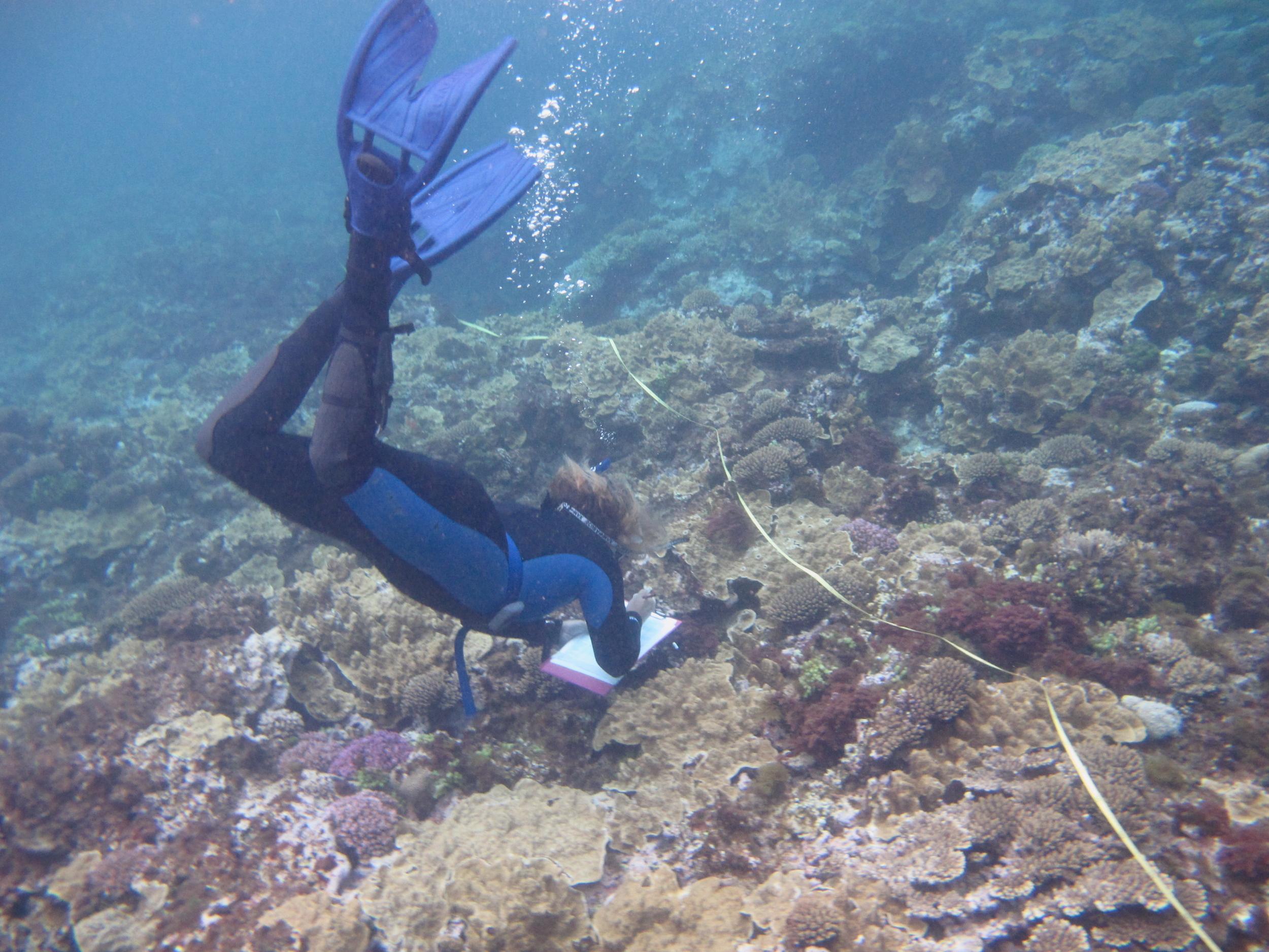 Conducting species abundance surveys at Lord Howe Island