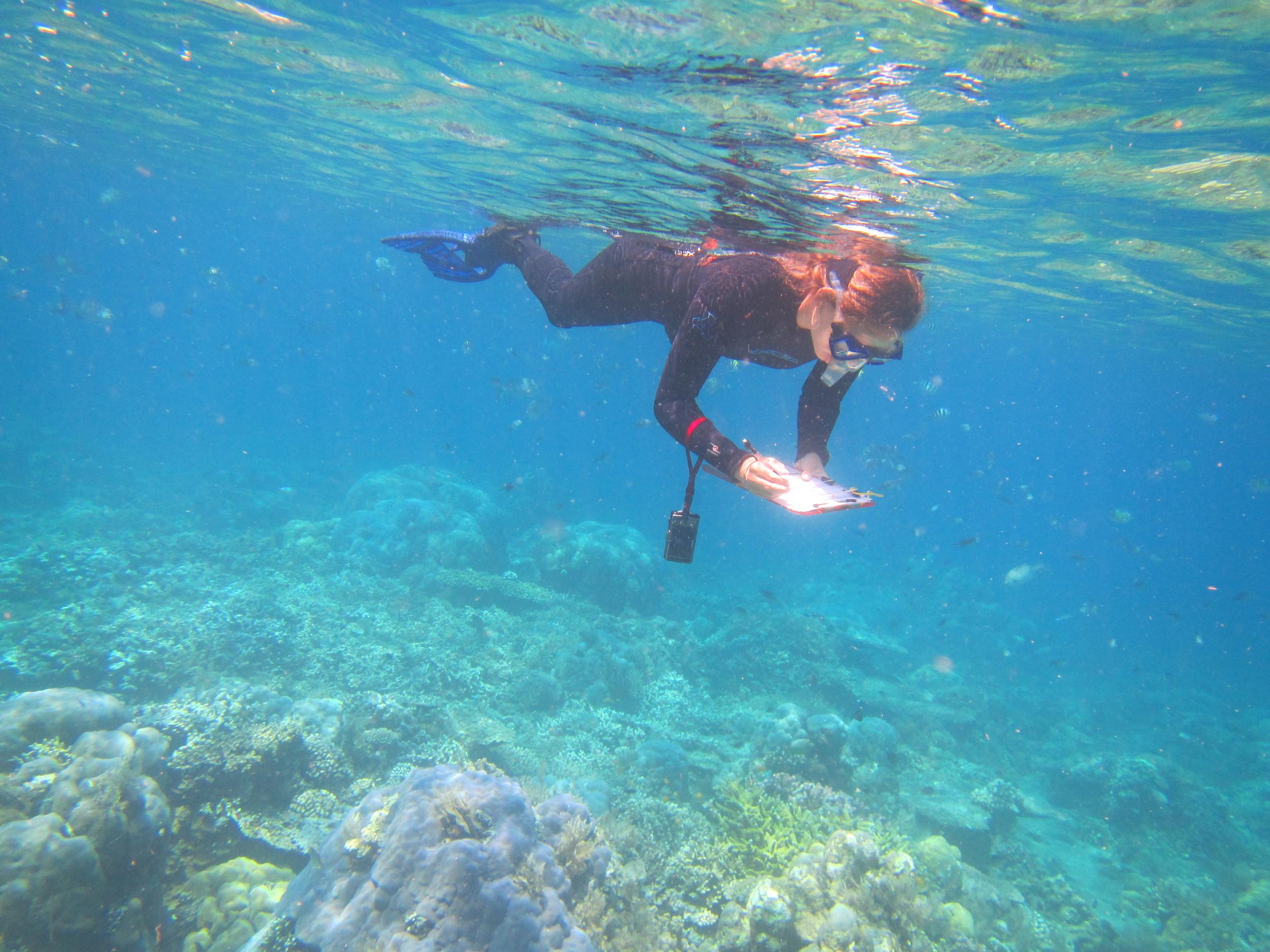 Conducting surveys in Bali