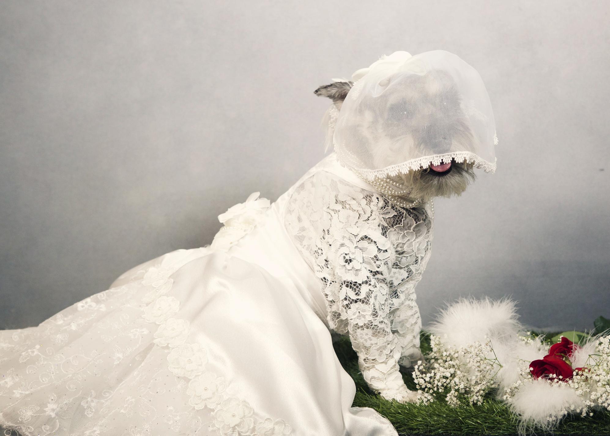 dog- 116 kristie-lee-photographer.jpg