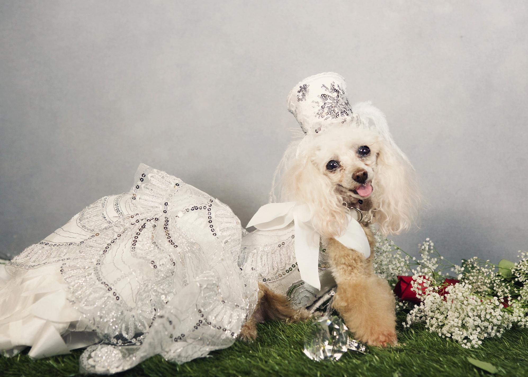 dog- 162 kristie-lee-photographer.jpg