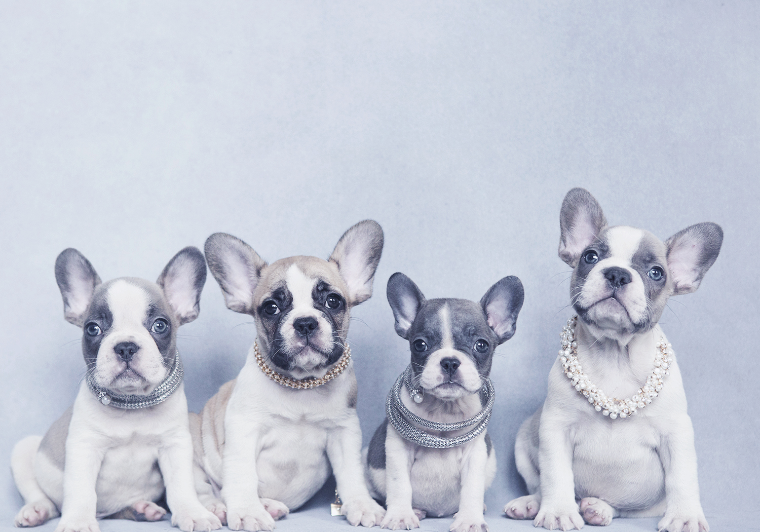 Photographing Dogs - Tips and tricks when working with all different breeds.
