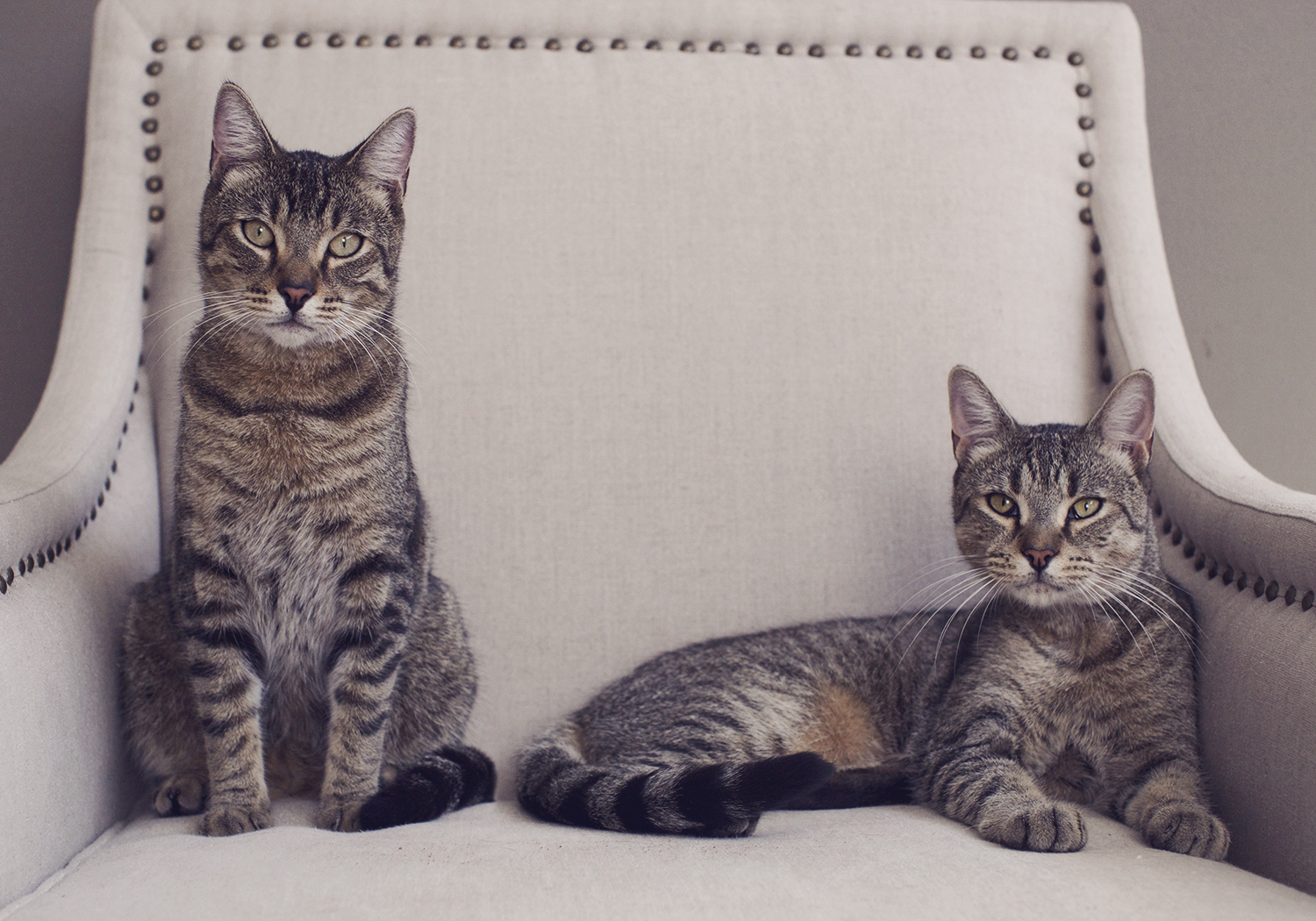 Photographing Cats - Tips and tricks when working with different cat personalities.