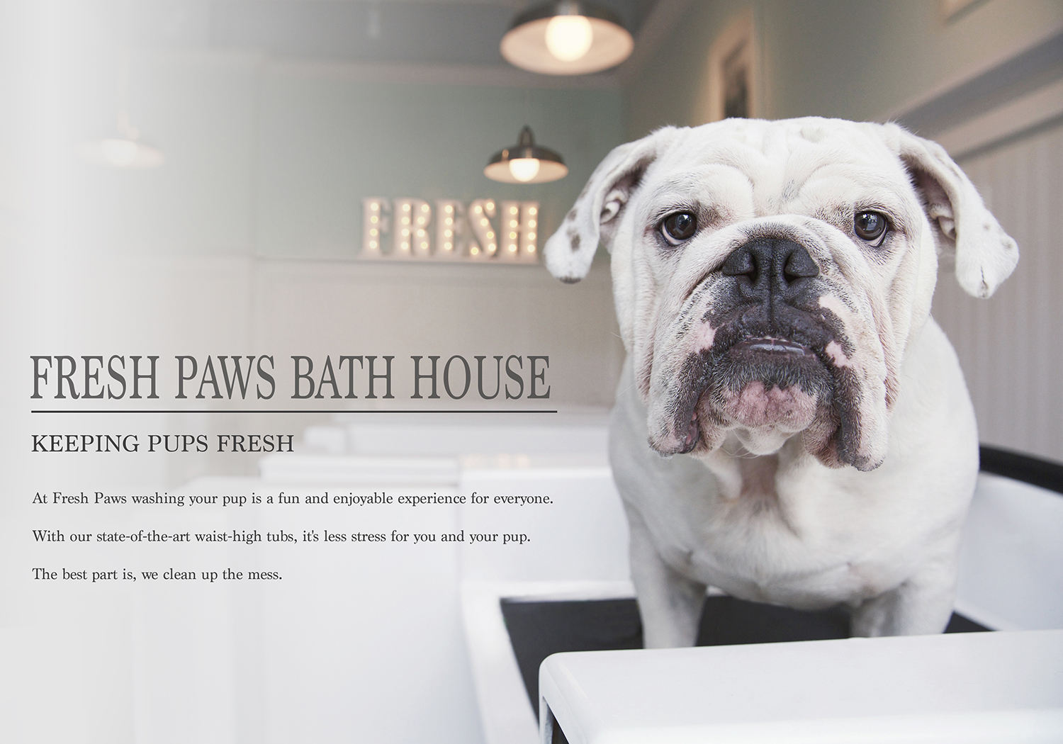 Photographing for Pet Business - Dog groomers, day cares and pet stores.
