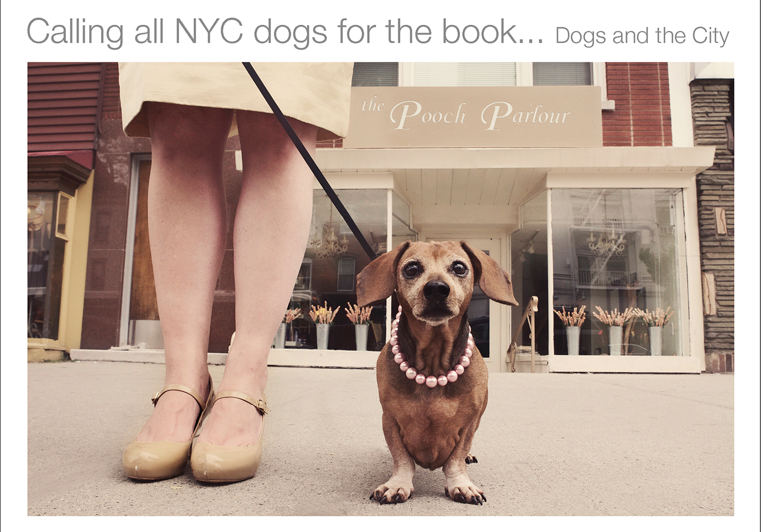 Marketing your Pet Photography - New clients, networking and creating connections.