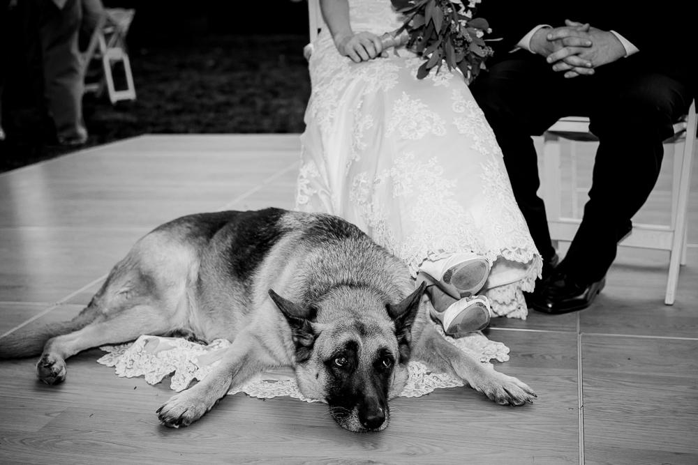 Buchheit_Wedding_Story-35.jpg
