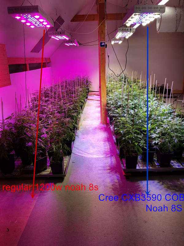 LR-medical+plants+growth+very+well+under+our+led+grow+lights.jpg