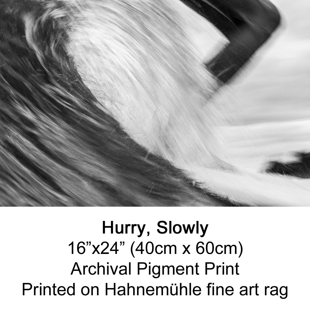 Hurry Slowly by fran miller.jpg