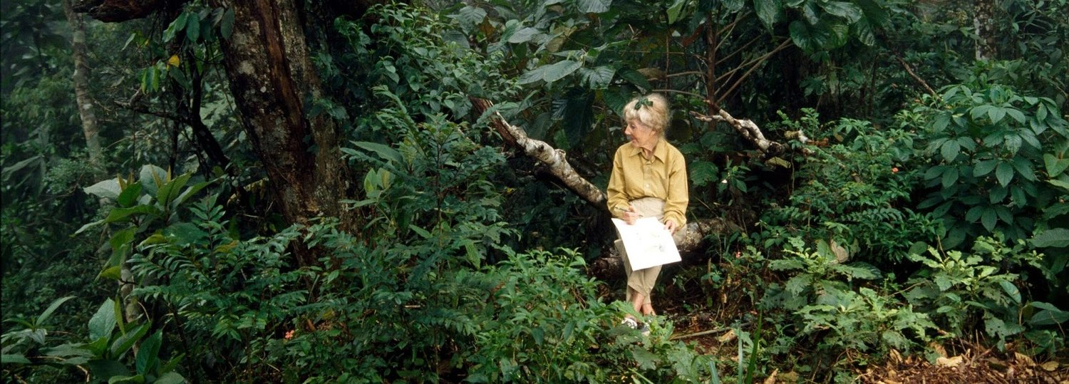 MARGARET MEE AND THE MOONFLOWER   ( Margaret Mee e a Flor da Lua,  Malu de Martino, Brazil, 2012, 78 min. In Portuguese and English with English subtitles)  Discover the work and legacy of botanical illustrator Margaret Mee in Malu de Martino's documentary  Margaret Mee and the Moonflower . The British-born artist spent more than 36 years in Brazil, completed fifteen expeditions into the Amazon rainforest, and produced over 400 illustrations of Brazilian flora, works that are now central to contemporary botanical science research. Drawing on her diaries, interviews, and narratives, the film reveals a tireless advocate for the preservation of Brazilian rainforests and an artist not afraid to command her craft in defense of environmental conservation.   Saturday, August 31, 2pm