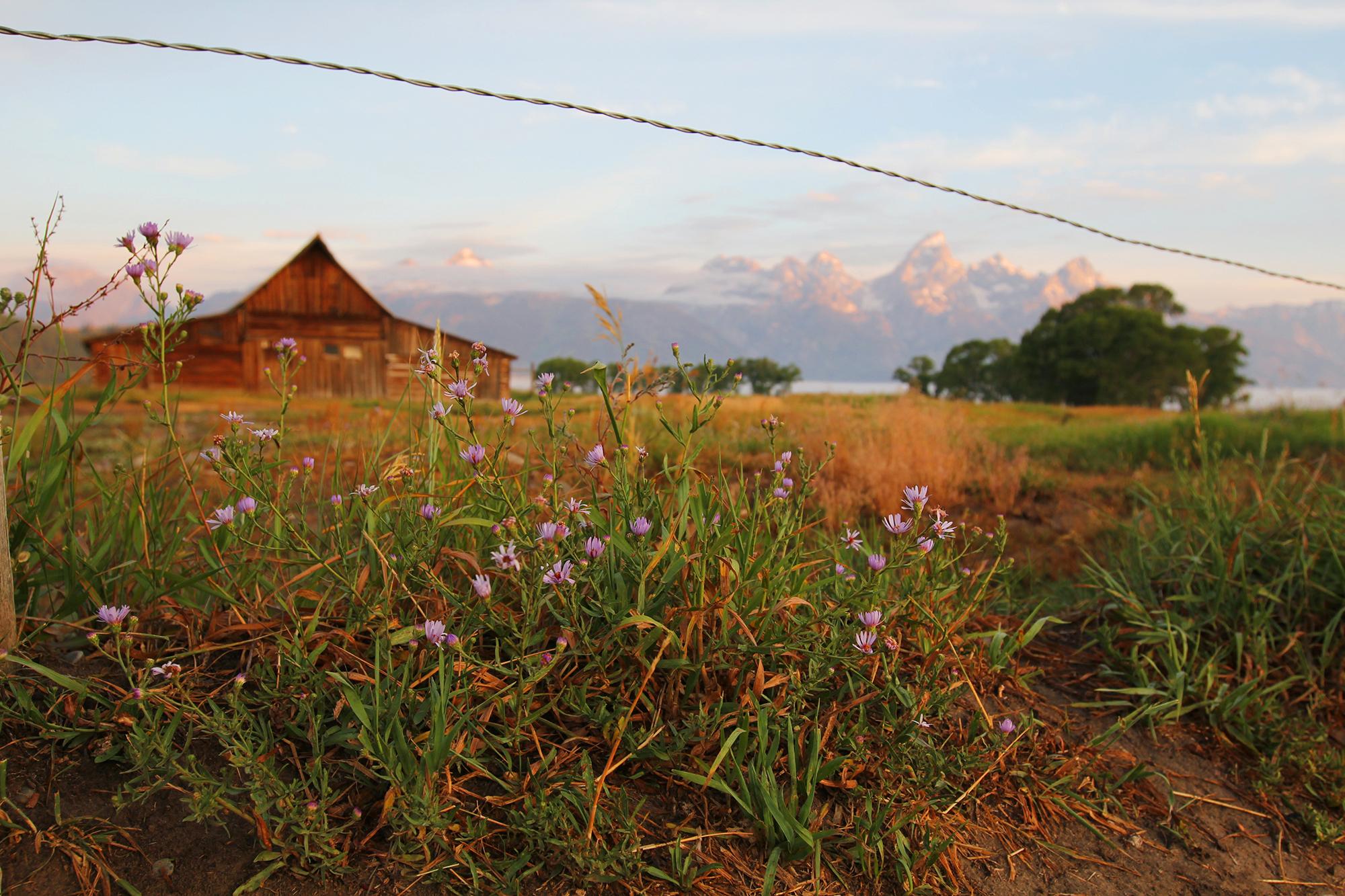 jo-torrijos-states-of-reverie-grand-teton-national-park-mormon-row-sunrise-9.jpg