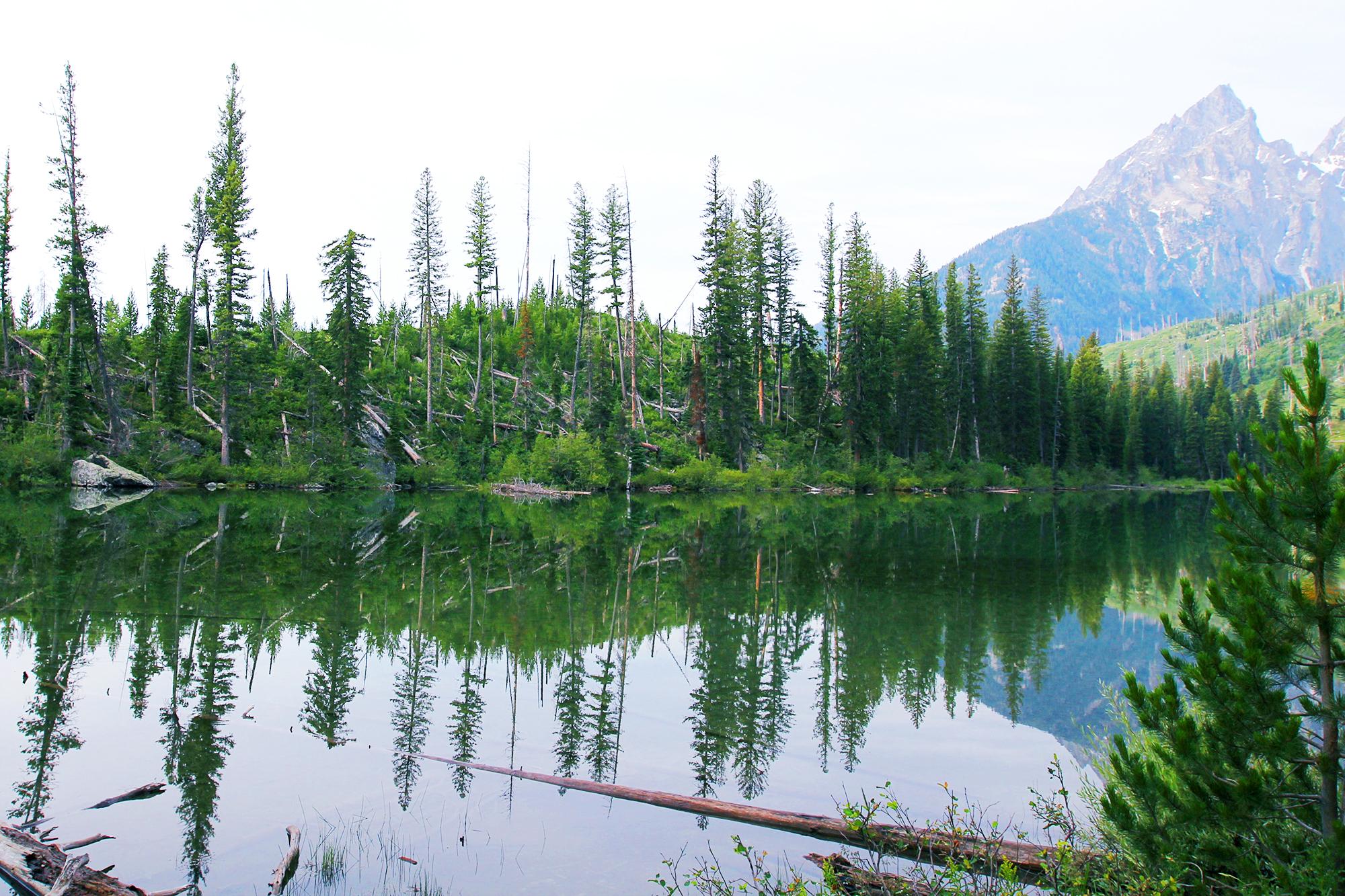 jo-torrijos-states-of-reverie-grand-teton-national-park-string-lake-hike-4.jpg