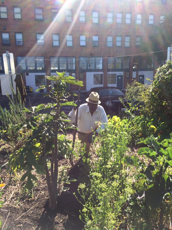Roots garden.jpg