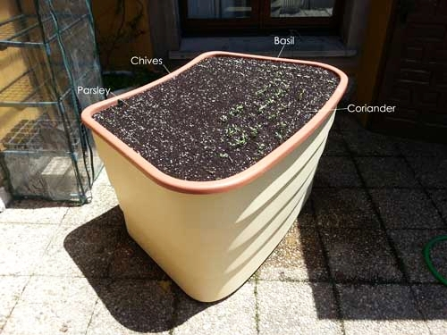 About-to-plant-seed-in-a-green-circle-raised-garden-bed-for-wheelchairs.