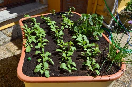 Seedlings-edible-garden-green-circle-wheelchair-accessible-raised-garden-beds.for-urban-community-gardening