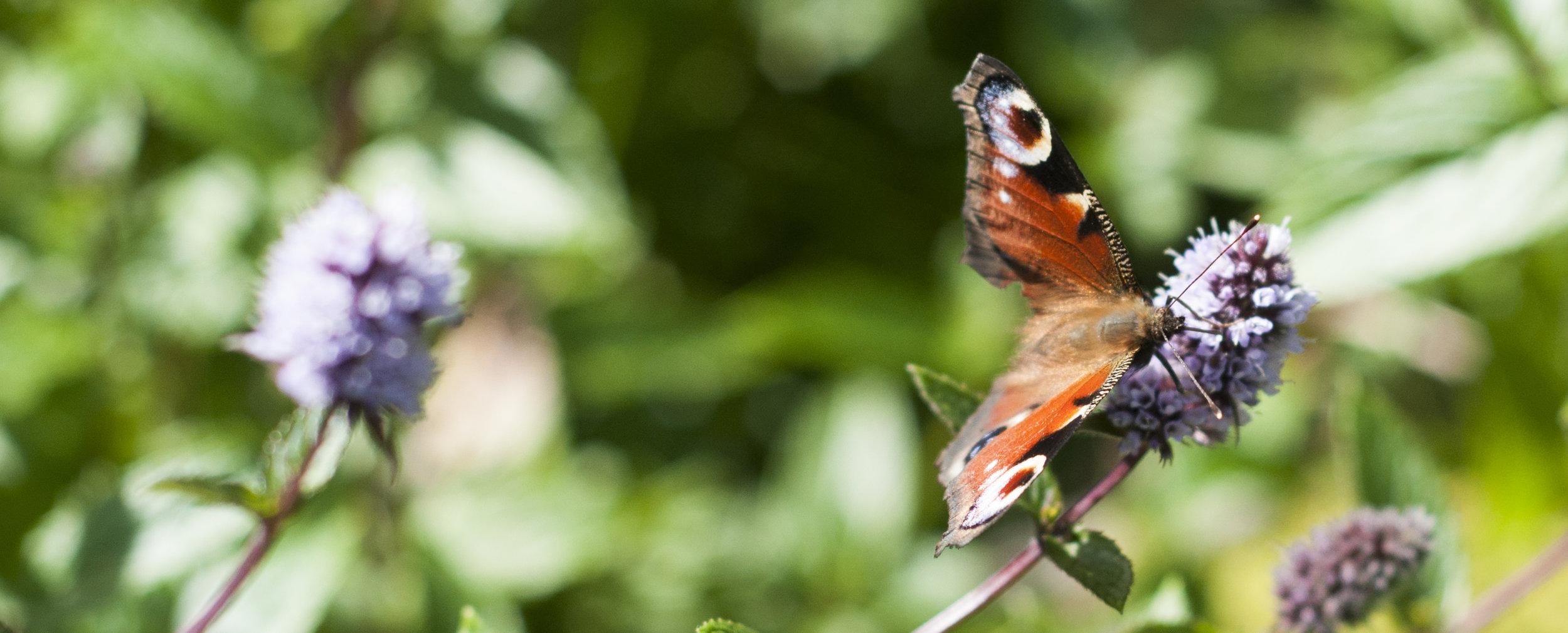 Ingen kan motstå en sommerfugl ;)