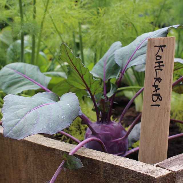 MONDAY!!! Always a good moment to transform ideas into reality.  And what about the goals you've set for 2019?! Like, eating more veggies.  Prepare for spring and plan a vegetable garden or some containers with herbs to start with.  Let's get outside !!! #gardentips #gardening #veggies #gardenlovers #gardener #vegetablegarden #gardeninspiration #greendesign #healthy #eatmoreveggies #resolutions #greenthumb #huerta #homegrown #outandabout #mygarden #chelseaflowershow #plantsagram #gardenlife #urbangardening #seasons #ediblegarden